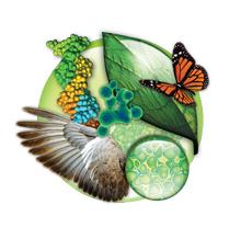 Imagen representativa de la Biología(DNA, Ala de Ave, Hoja y Mariposa, Molécula y células de planta)