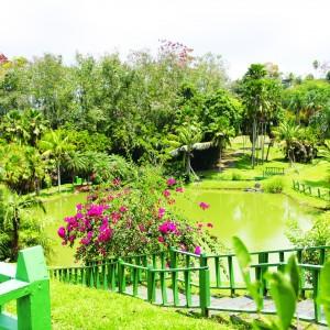 Jardín Botánico – Fotos y videos